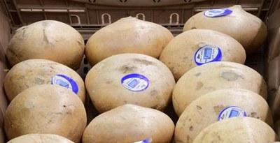 How To Store Jicama